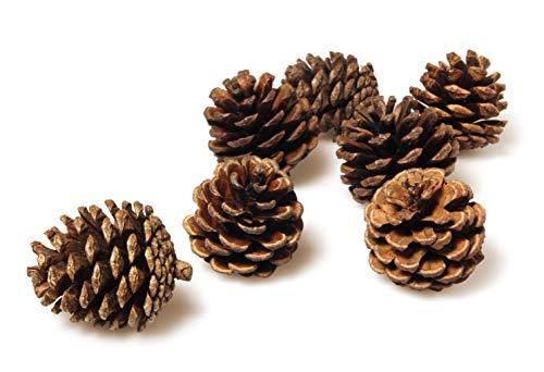 Pinecones Bulk - 50 Pine Cones in...