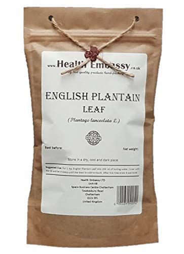 English Plantain Leaf (Plantago...