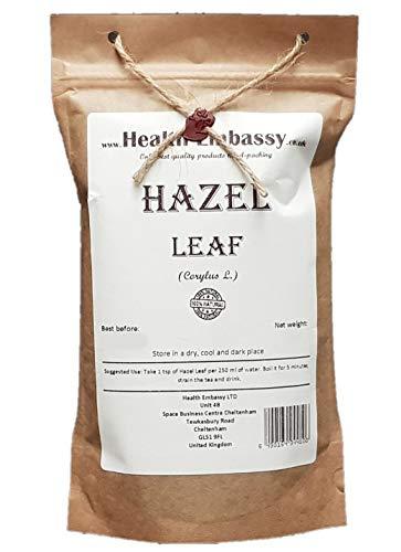 Hazel Leaf (Corylus L. - Corylus...