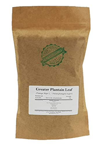 Greater Plantain Leaf - Plantago...