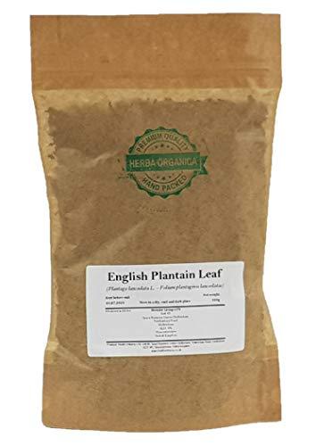English Plantain Leaf - Plantago...