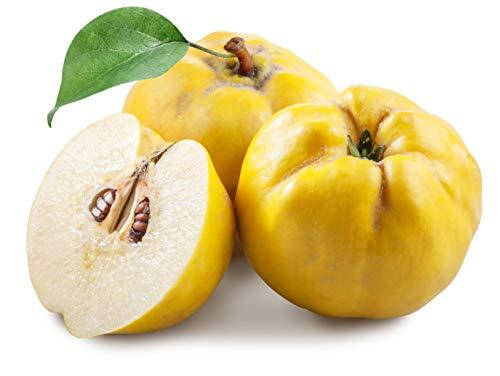 Organic Quince Fruit 9 lb. box