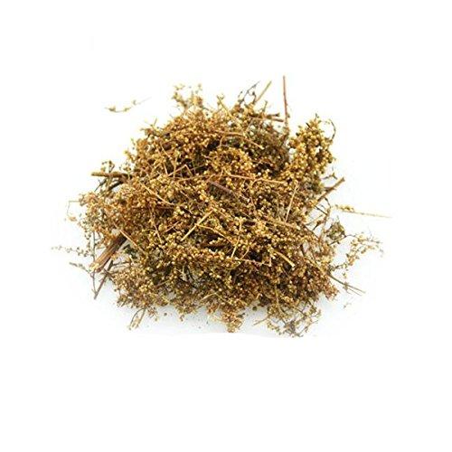 Sweet wormwood Artemisia annua...