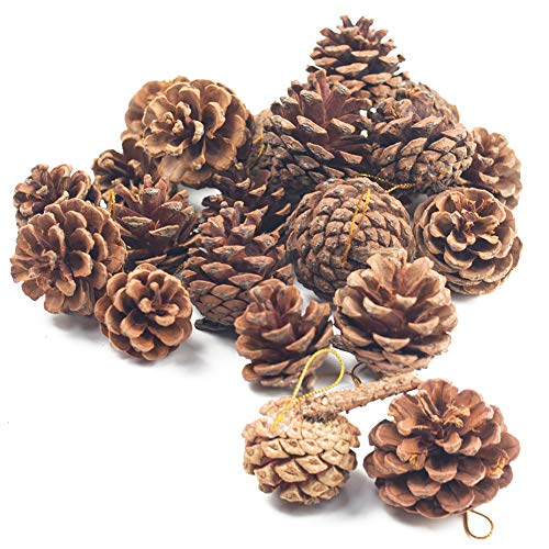 Johouse Natural Pine Cones,...