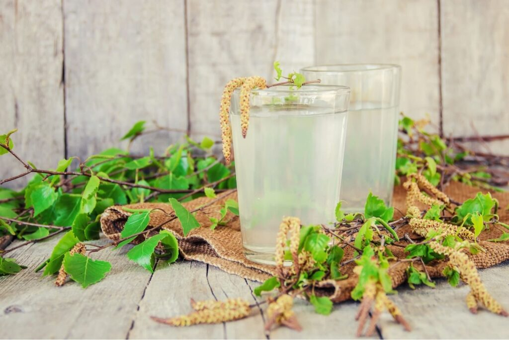 9 Natural Treatments for Rheumatism - Birch Sap