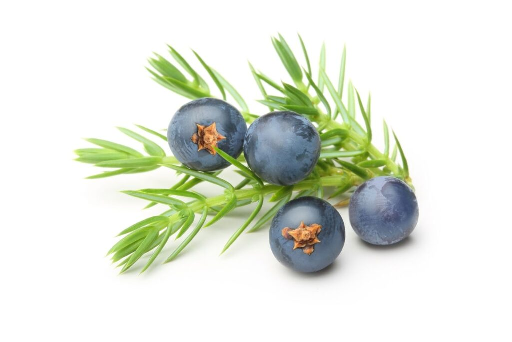 4 Natural Treatments for Cystitis – Juniper