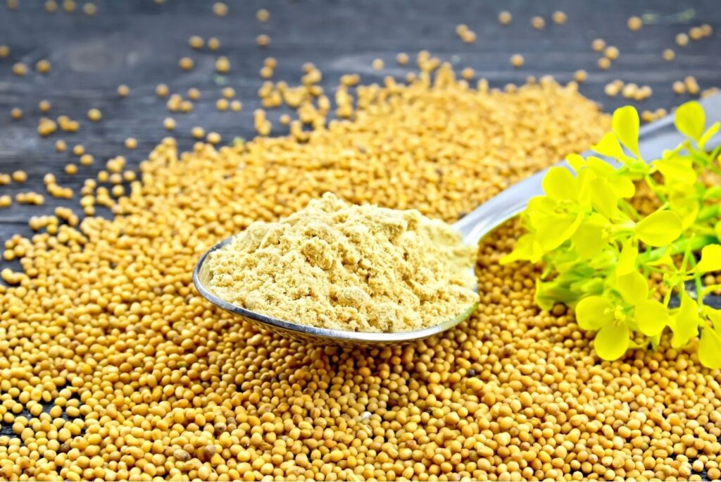 Natural Treatment for Cold – Mustard Powder Seeds