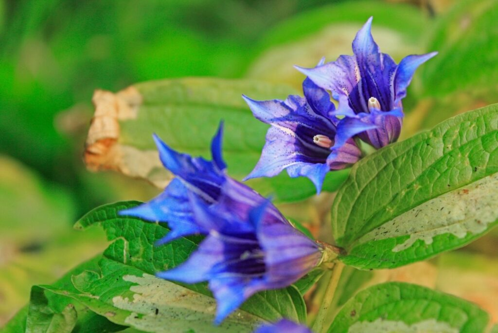 19 Best Natural Treatments for Gastritis - Willow Gentian