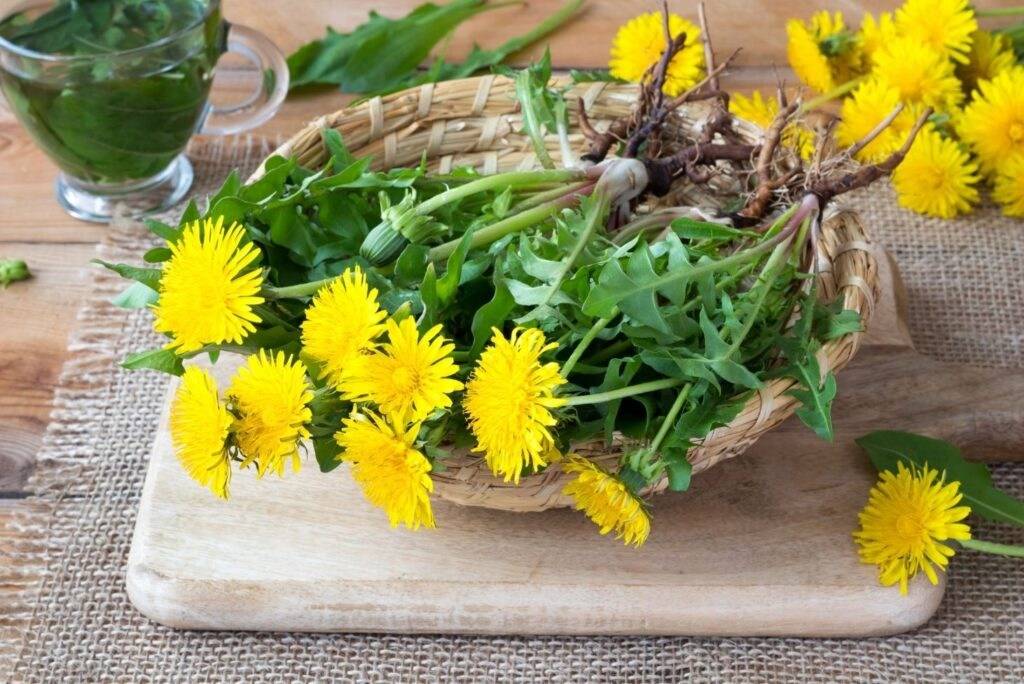 2 Home Remedies for Gallbladder Attacks – Dandelion