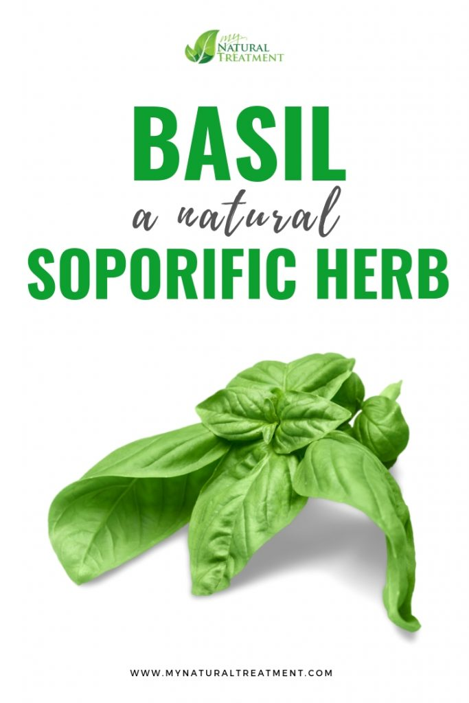 Basil, a Natural Soporific Herb