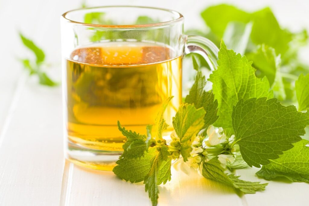 10 Best Home Remedies for Yeast Infection - White Dead Nettle