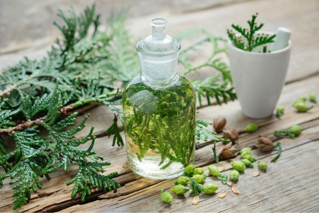 Natural Treatment for Pityriasis Lichenoides - Thuja Tincture