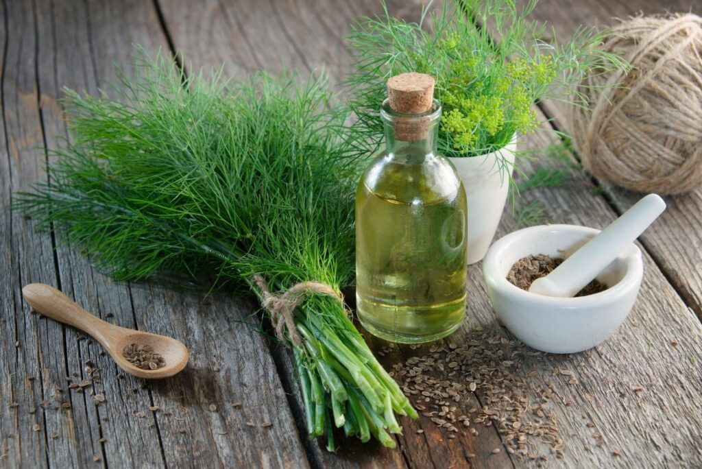 2 Natural Remedies for Poor Ovulation with Dill - Dill Seeds Tincture