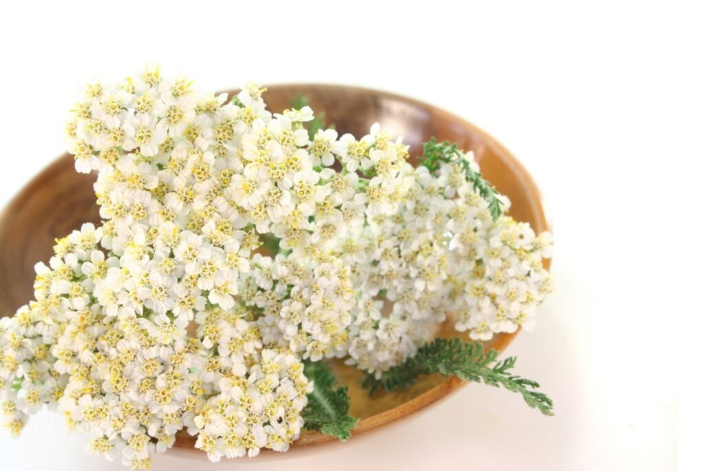 4 Natural Remedies for Vaginal Prolapse - Yarrow