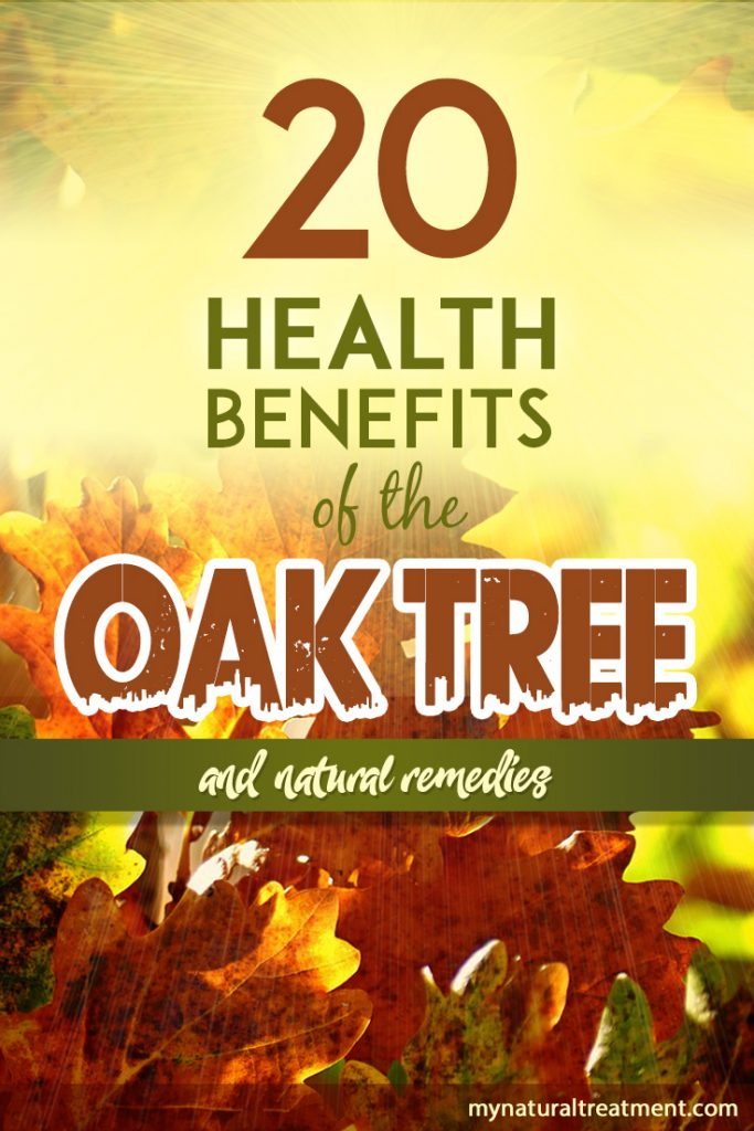 20 Health Benefits of The Oak Tree Leaves | Uses and Remedies
