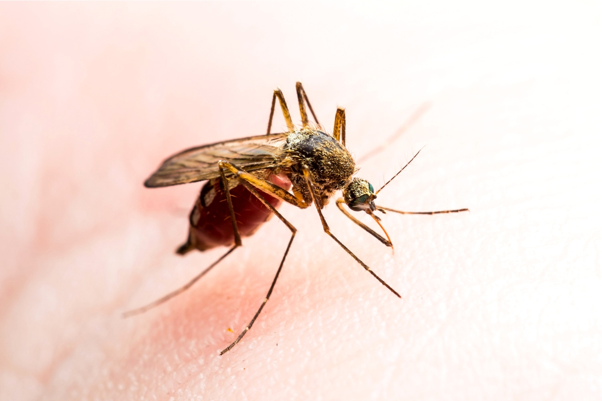 Best Home Remedies for Insect Bites