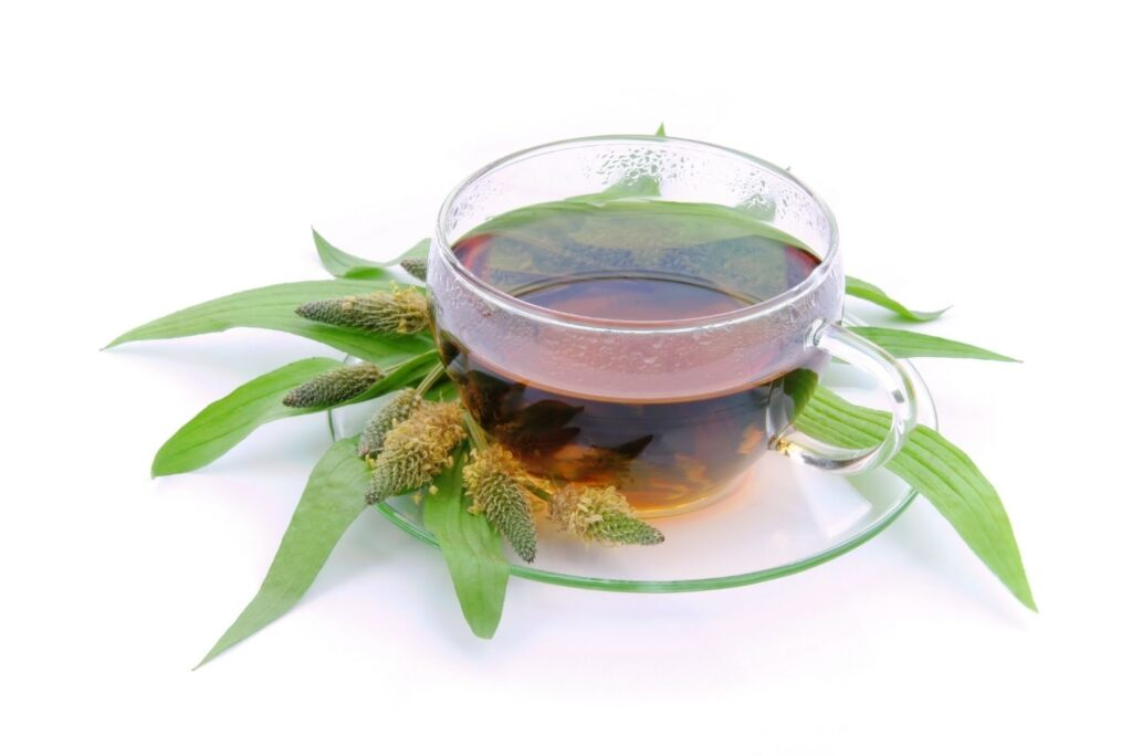 12 Best Home Remedies for Strep Throat - Plantain Tea