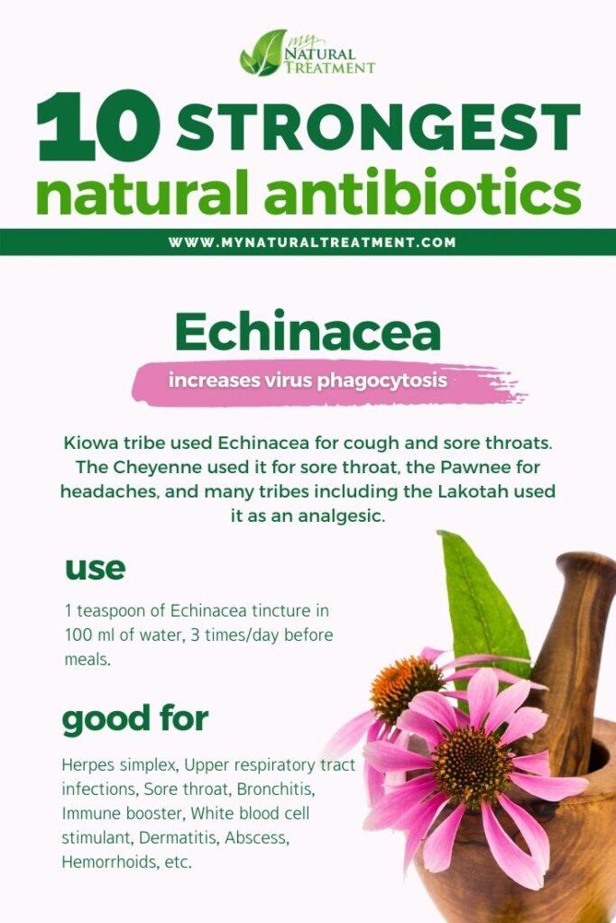 Strongest Natural Antibiotics - Echinacea - MyNaturalTreatment.com