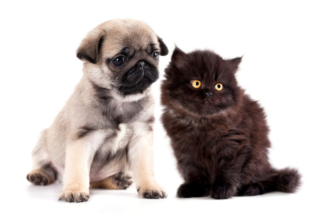 Remedies for Pets #catremedies #dogremedies