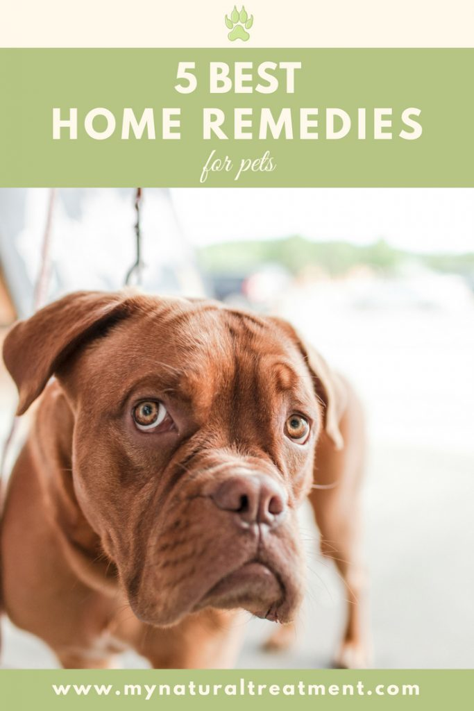 5 Best Home Remedies for Pets with Recipes #catremedy #dogremedy