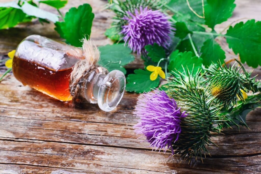 30+ Burdock Root Uses, Benefits, and Amazing Home Remedies - Flowers