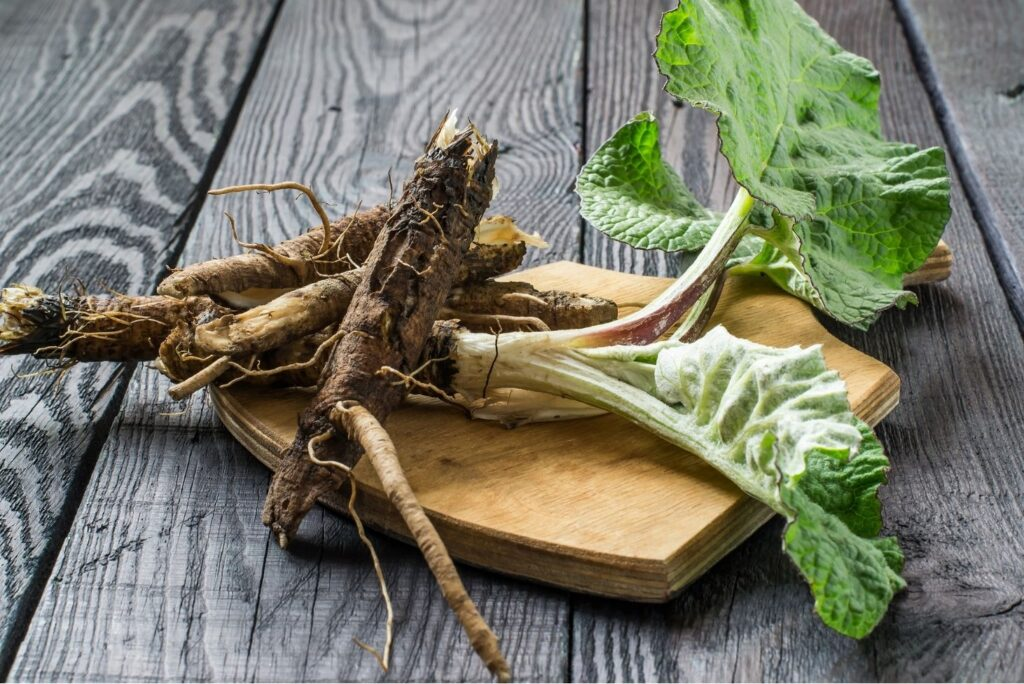 30+ Burdock Root Uses, Benefits, and Amazing Home Remedies - Root