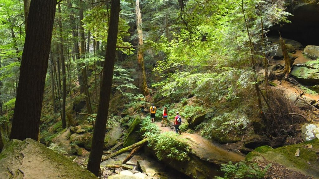 Forest bathing for healing