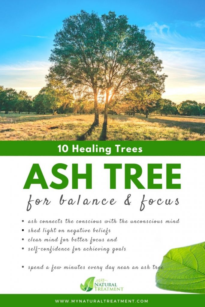 Ash Tree Healing - What Ash Tree is Good For #ash #treehealing
