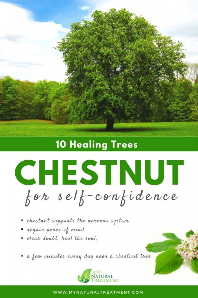 Chestnut Tree Healing - What Chestnut Tree is Good For #chestnut #treehealing