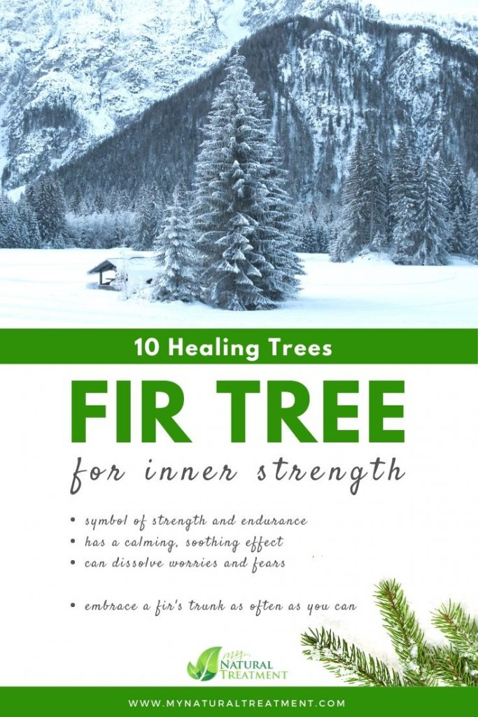 Fir Tree Healing - What Fir Tree is Good For #firtree #treehealing
