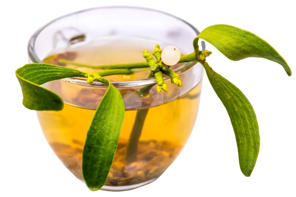 What Is Mistletoe Good For? 11 Mistletoe Uses, Health Benefits & Home Remedies - Mistletoe Tea