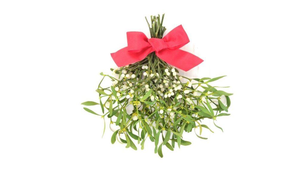 What Is Mistletoe Good For? Mistletoe Uses