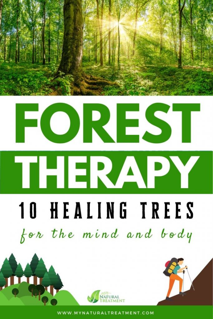 What is Forest Therapy? Discover 10 Healing Trees for The Mind & Body #mynaturaltreatment #foresttherapy #forestbathing #treehealing