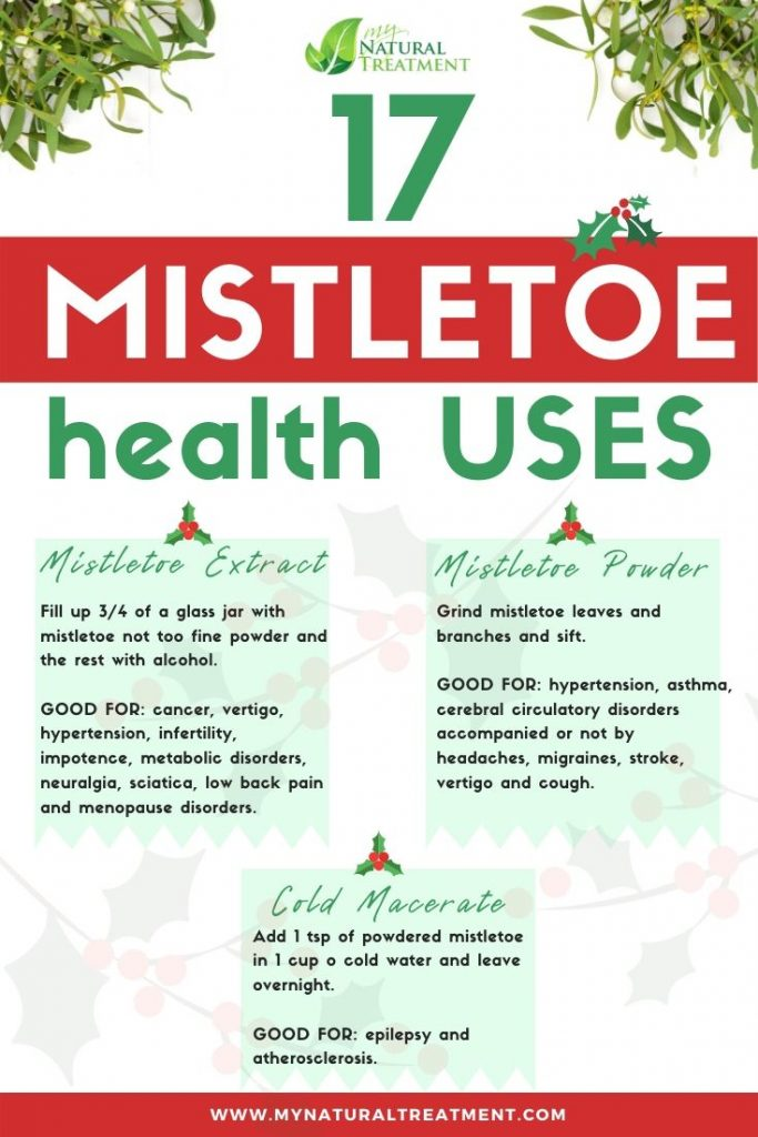 17 Mistletoe Uses for Health with Recipes