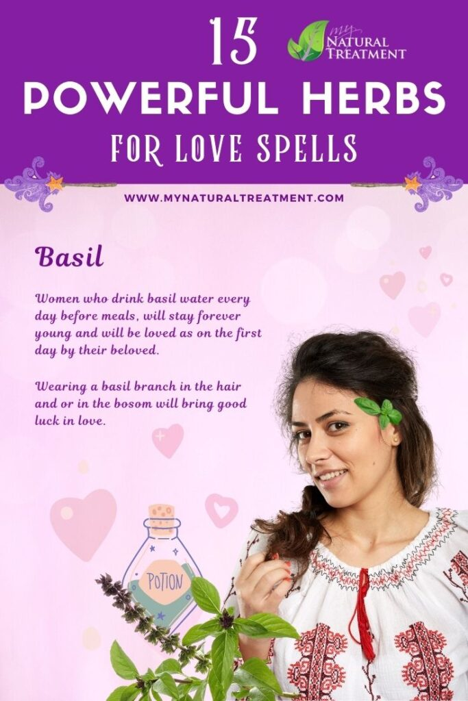 Basil - Powerful Magic Herbs for Love Spells
