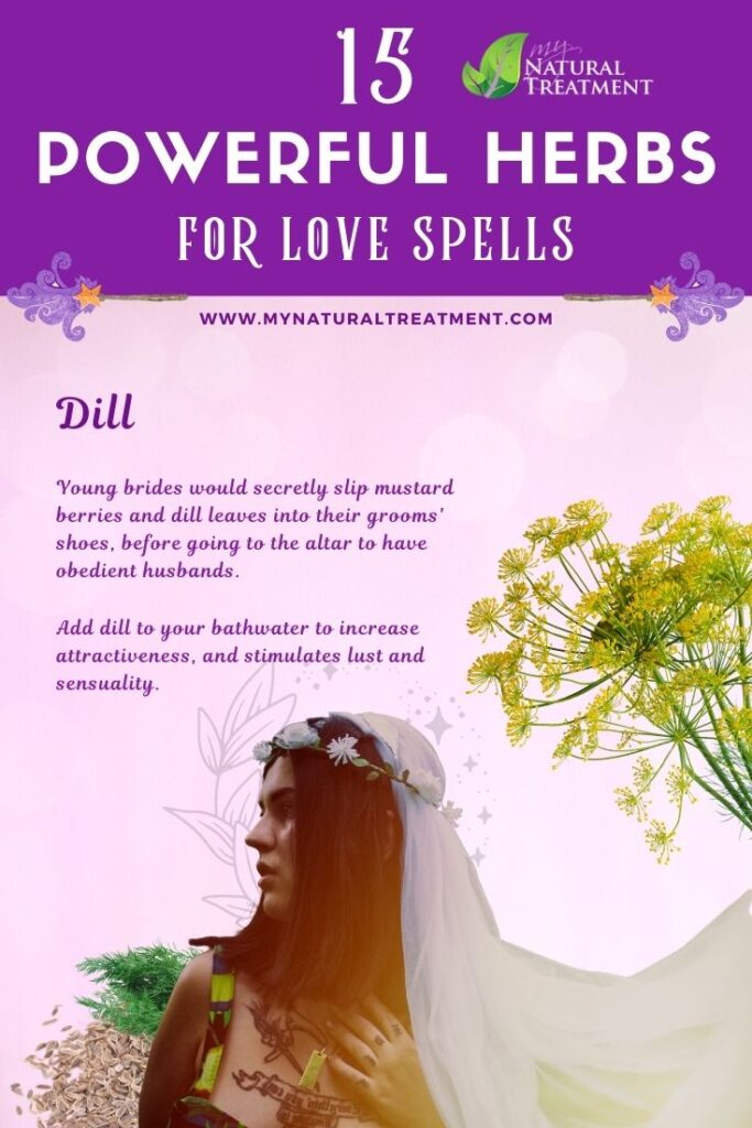 Dill - Powerful Magic Herbs for Love Spells