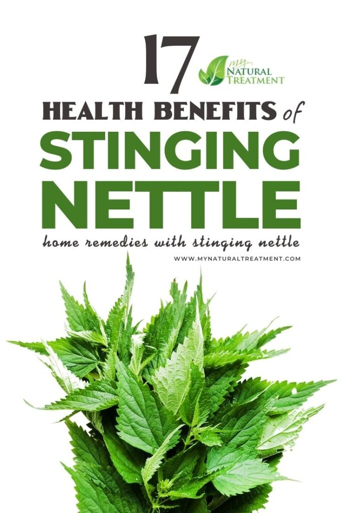 17 Stinging Nettle Health Benefits, Uses & Home Remedies - MYN