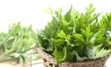 Hydroxychloroquine Natural Alternatives