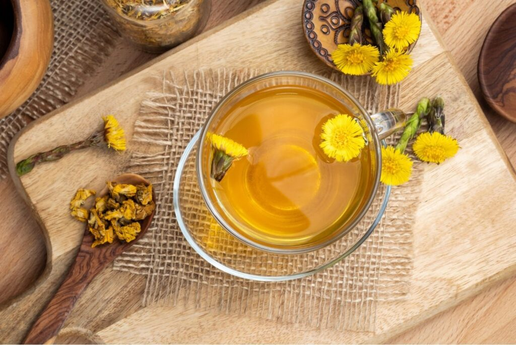 Powerful Herbal Remedy for Lung Fibrosis - Coltsfoot