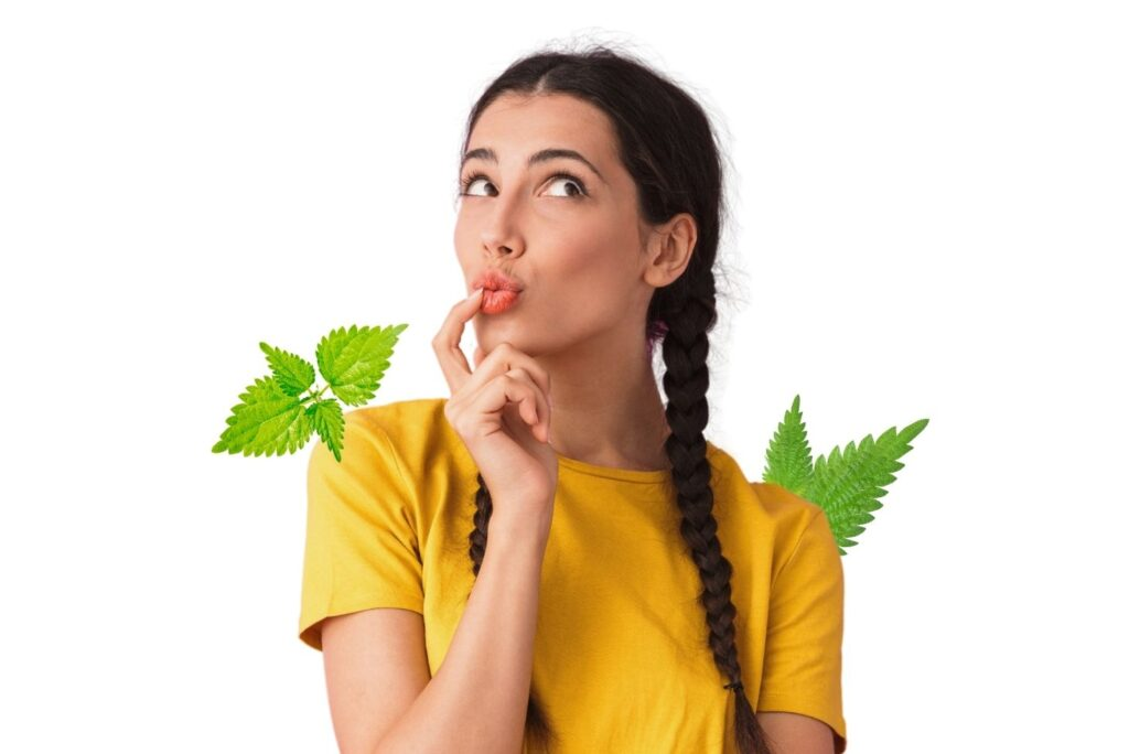 Stinging Nettle Health Benefits, Uses & Home Remedies - MyNaturalTreatment.com