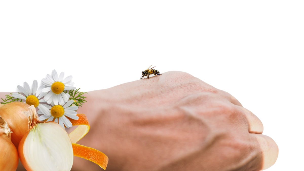 4 Best Home Remedies for Bee Sting