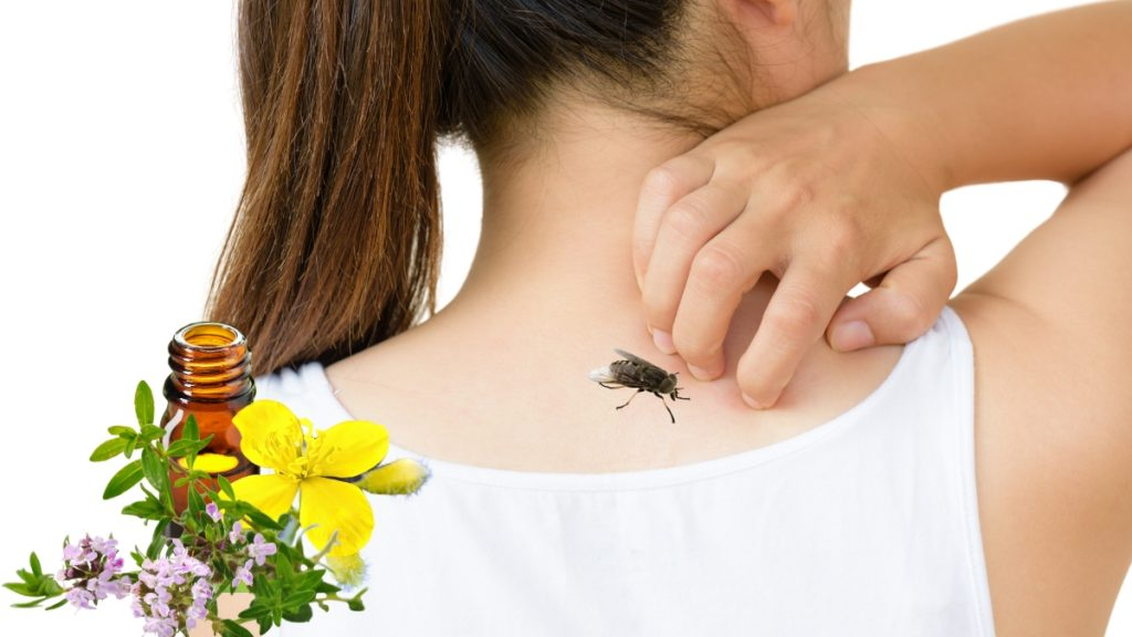 Home Remedies for Horsefly Bites