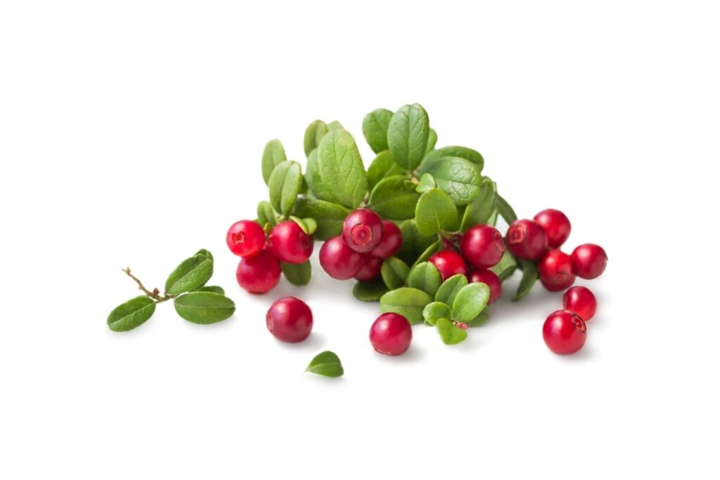 Home Remedy for Nephritis Bearberry Leaves