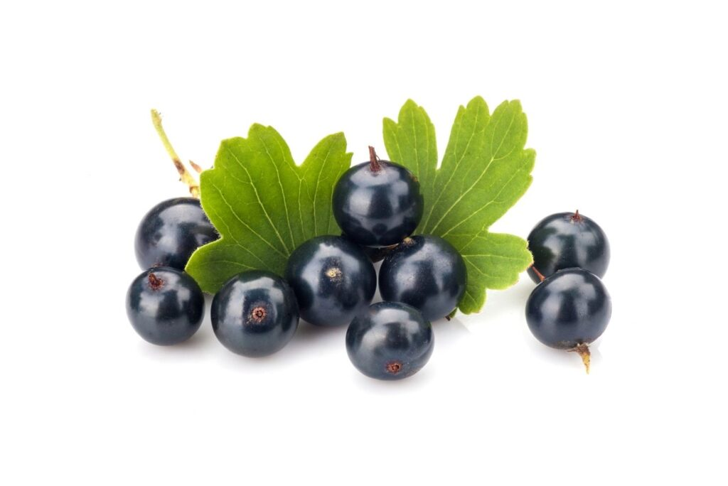 Natural Remedy for High Uric Acid %E2%80%93 Black currants