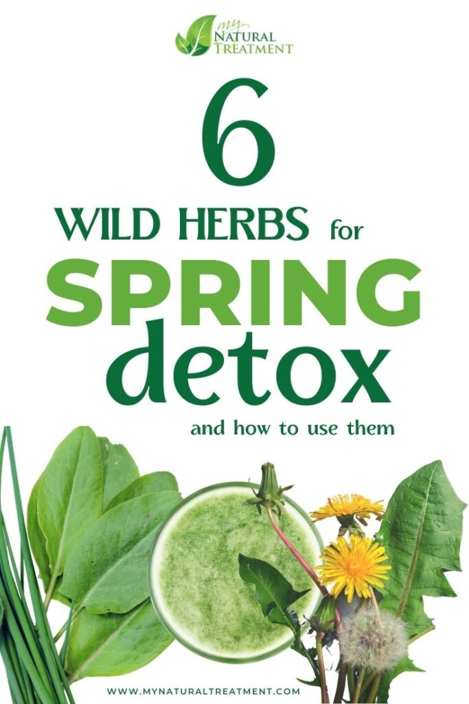 6 Wild Herbs for Spring Detox – Whole Body Cleanse - MyNaturalTreatment.com