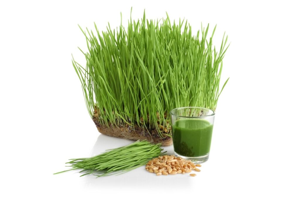 6 Wild Herbs for Spring Detox - Whole Body Cleanse - Wheatgrass Juice
