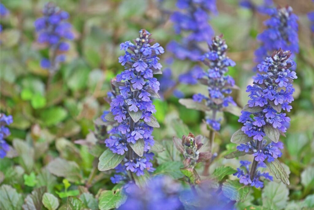 Herbal Elixir Recipes from Medieval Times and Their Use - bugleherb