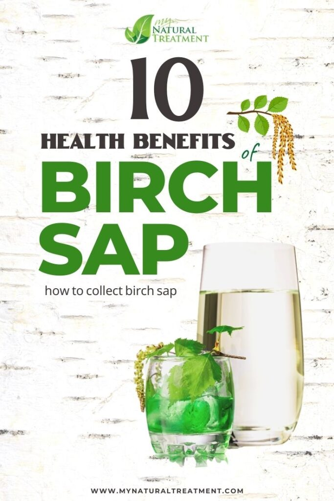 10 Health Benefits of Birch Sap and How to Collect