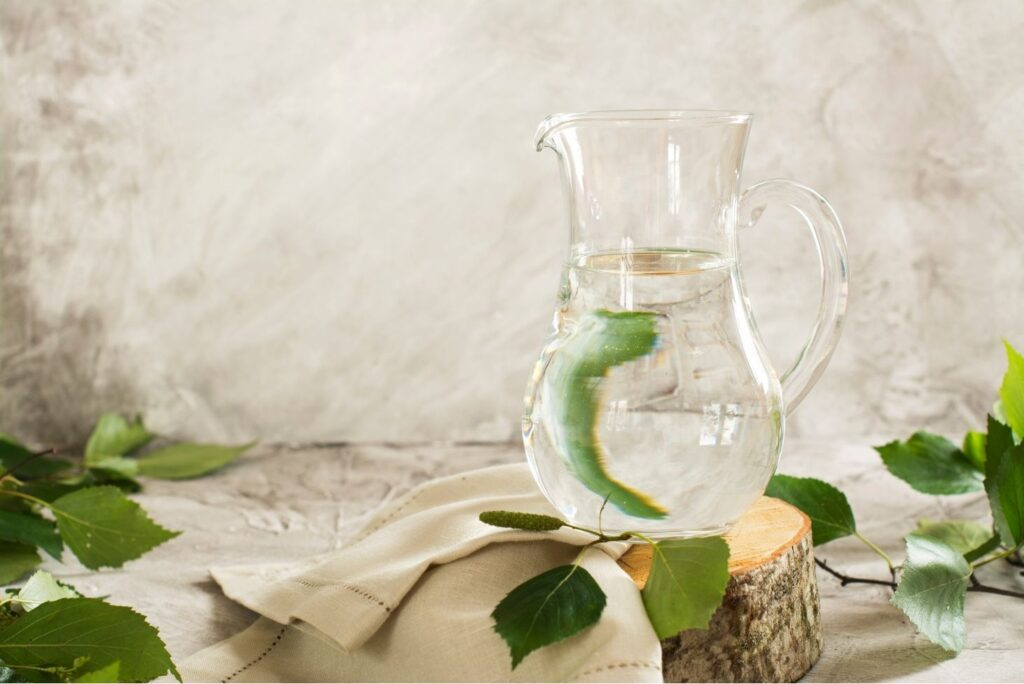 Birch Sap Health Benefits and How to Collect Birch Sap